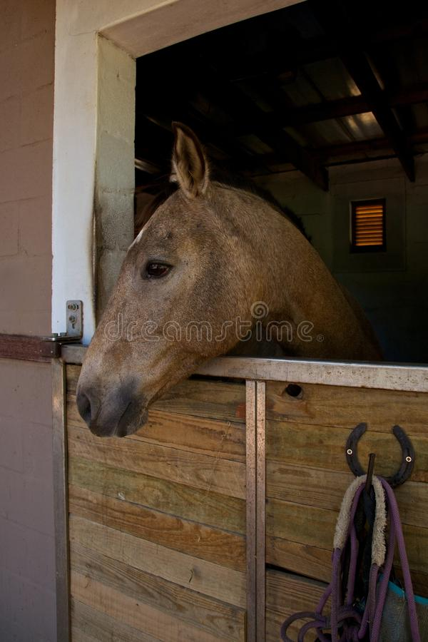 Download Horse, Stable Stock Photo - Image: 25381220