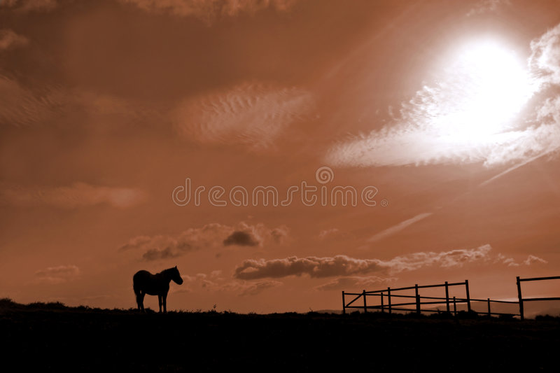 Horse and stable royalty free stock photos