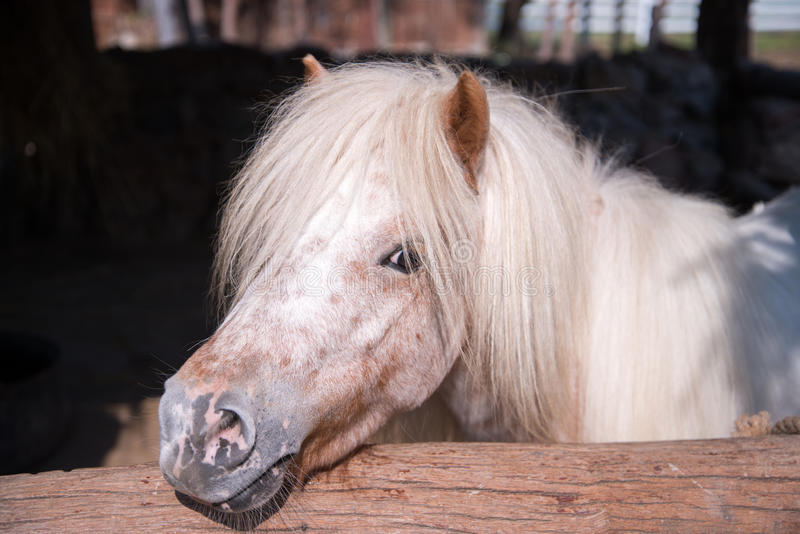 Horse in stable. Close up of Horse in stable stock photography