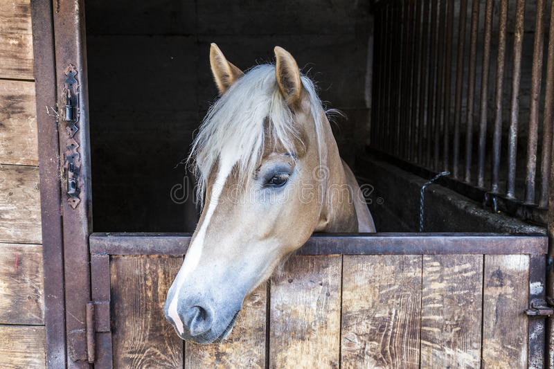 Download Horse In Stable Stock Image. Image Of Head, Equestrian   84485695