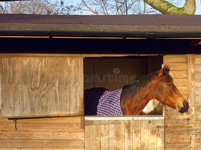 Horse in Stable stock photo