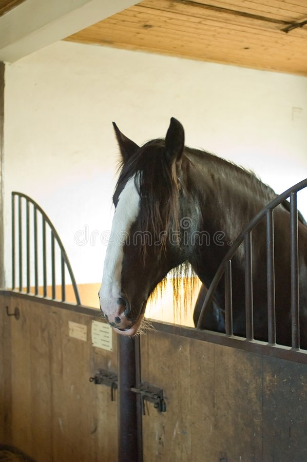 Horse Stables Royalty Free Stock Images