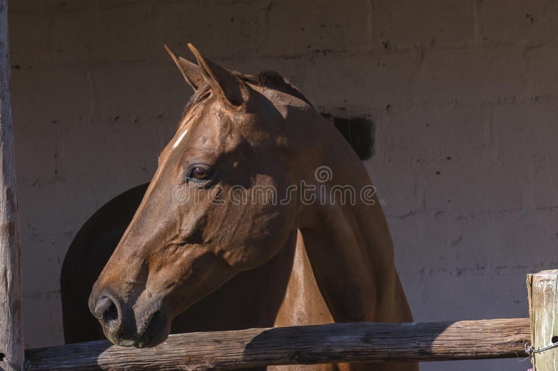 Horse Stables stock photography
