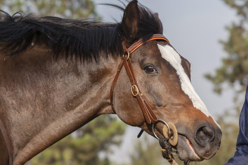Horse Stallion stock photo