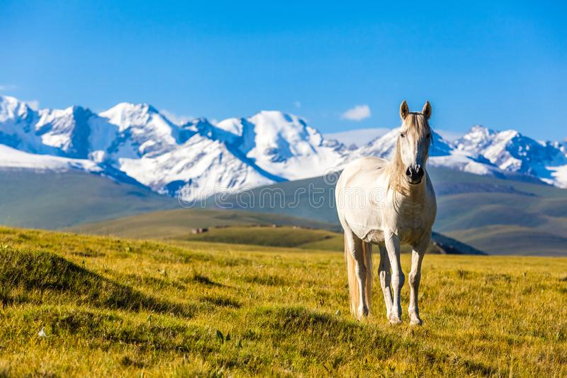 Horse stand under the mountain stock photography