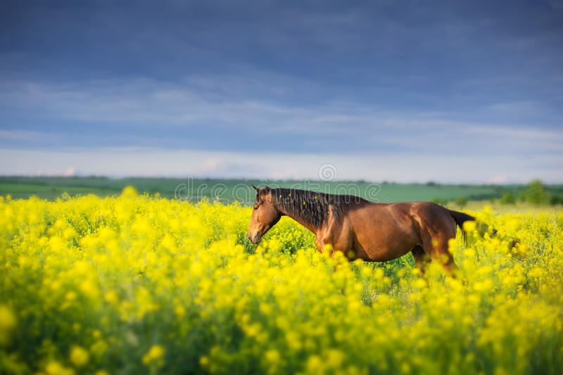 Horse standing in flowers royalty free stock photo