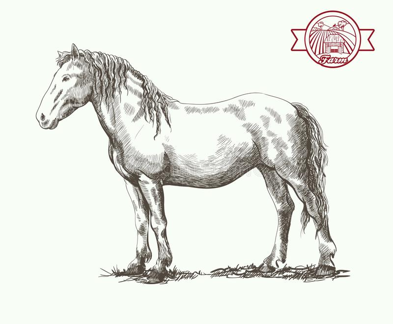 Horse standing. Graceful horse posing in a standing position vector sketch on a white background vector illustration
