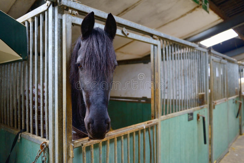 Download Horse in manege stable stock photo. Image of outdoors - 29854930