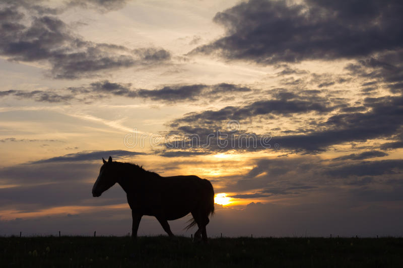 Horse stands on the crest of a grassy hilltop as the sunset royalty free stock photography