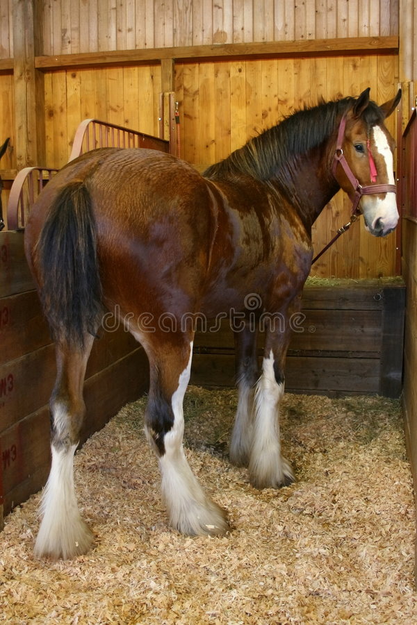 Horse at State Fair