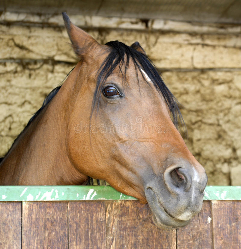 Download Horse Sticking Head Out Of Stable Stock Image - Image: 23225809