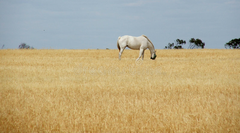 Download Horse in straw stock image. Image of rural, straw, farmland - 170773