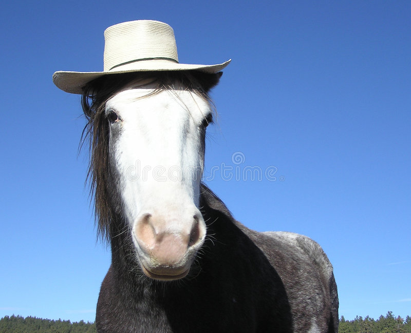 Horse with straw hat royalty free stock images