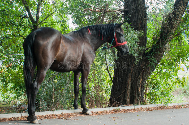Horse on the street. A horse on the street stock photography
