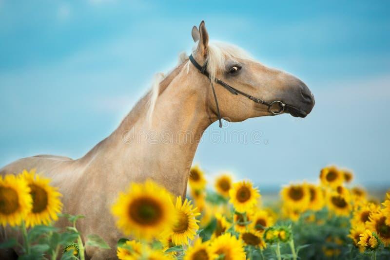 Horse on sunflowers stock image