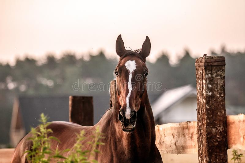 horse at sunrise in the meadow royalty free stock photography