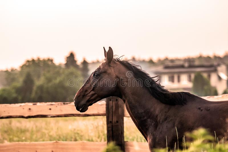 horse at sunrise in the meadow stock photos