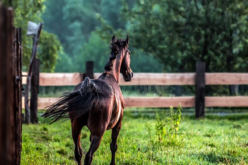 horse at sunrise in the meadow royalty free stock photos