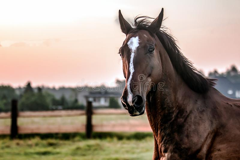 horse at sunrise in the meadow royalty free stock photo