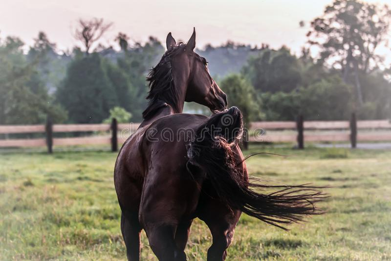 horse at sunrise in the meadow stock photo