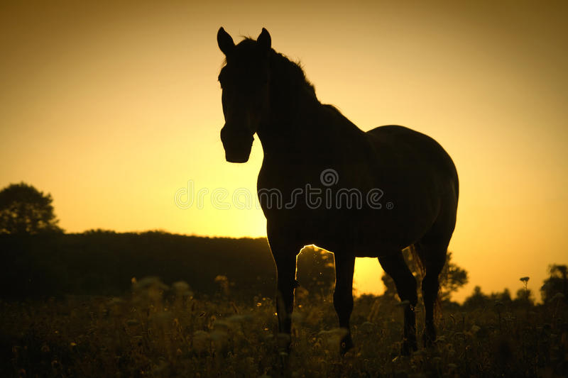 Horse and a sunset stock photos