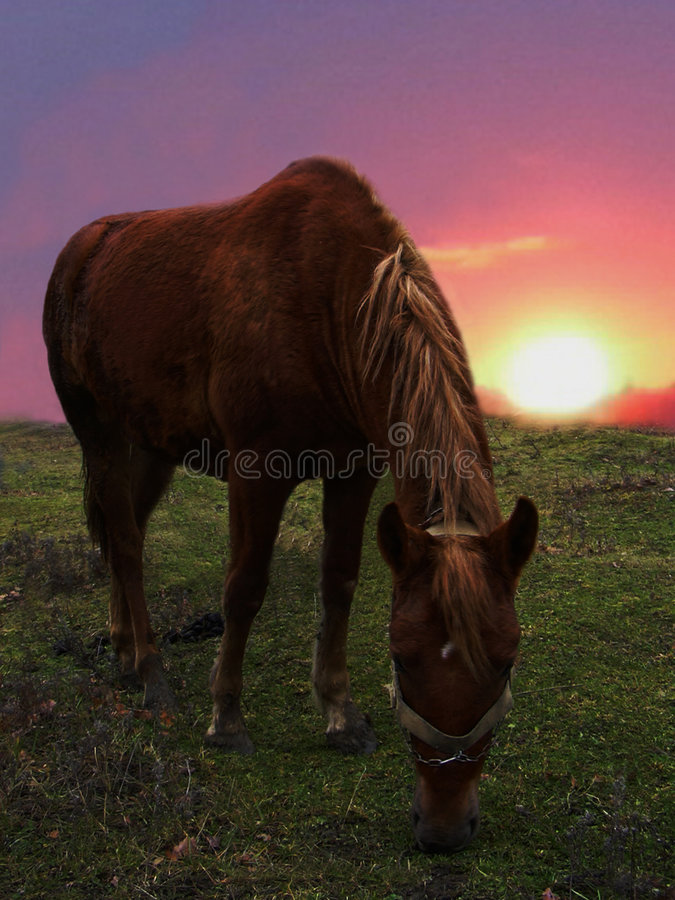 Horse and sunset stock photos
