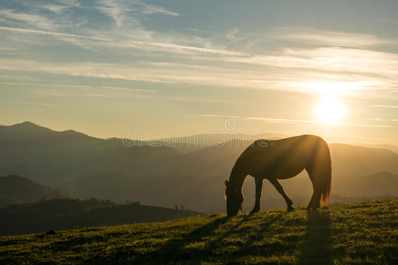 Horse at sunset. Peaceful background - grazing horses, beautiful sunset, picture for Chinese year of horse 2014