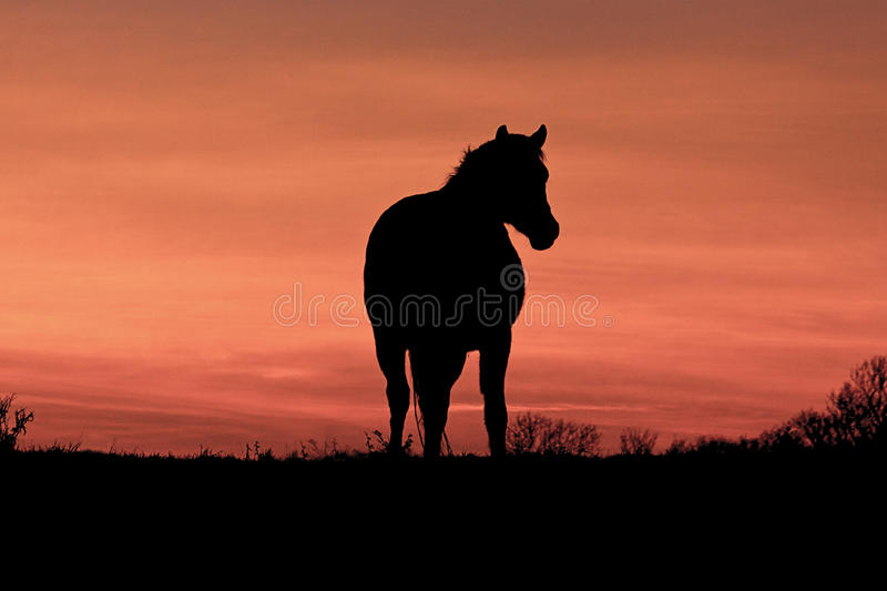 A Horse at Sunset royalty free stock image