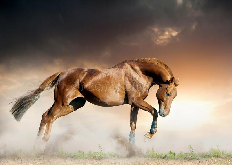 Horse in sunset stock photos