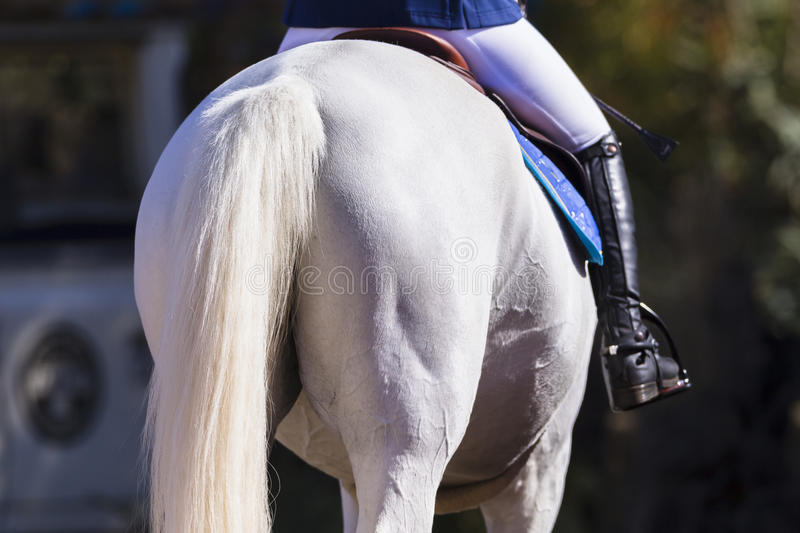 Horse Tail Grooming Rider royalty free stock photo