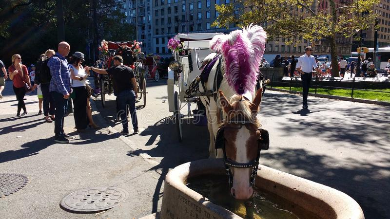 Horse and Carriage Rides in Central Park, NYC, NY, USA royalty free stock image