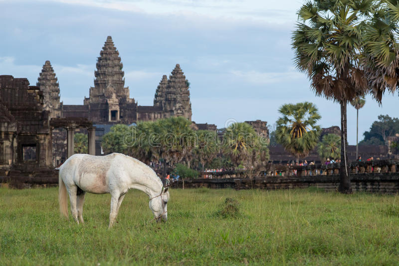 Horse and temple stock photo