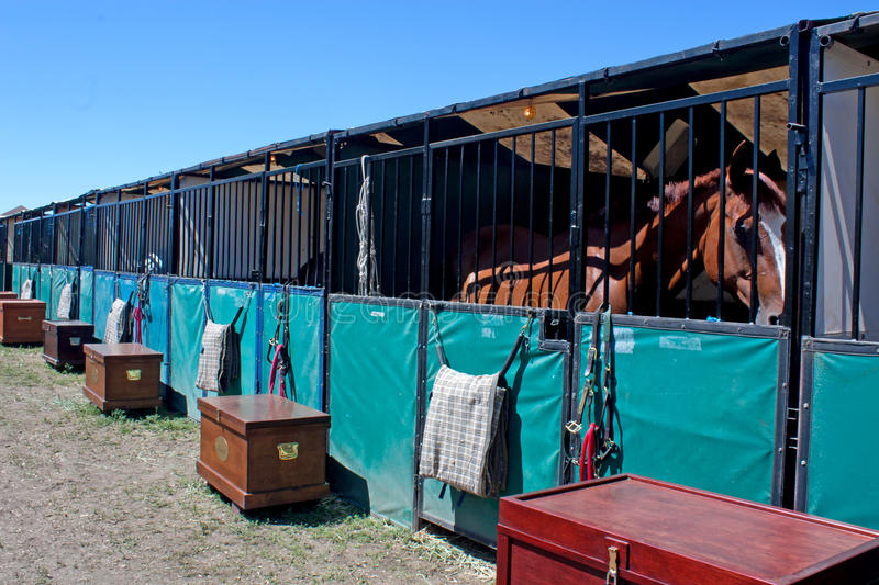 Download Horse In Temporary Show Stall Stock Photo - Image: 21082818