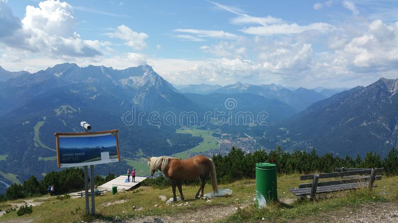Horse on top of the World royalty free stock photos