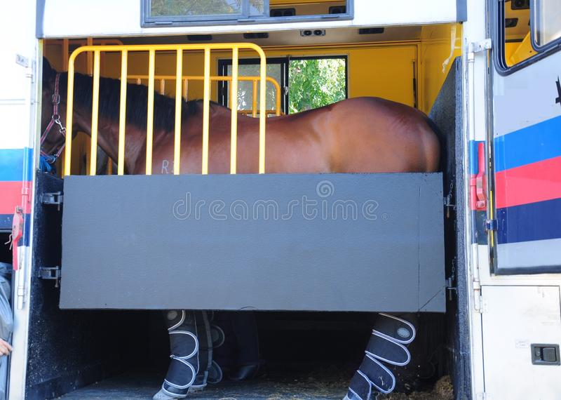 Download Horse Trailer stock photo. Image of equine, sport, boot - 38389184