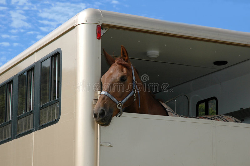 Download Horse in the trailer stock image. Image of pickup, tack - 996979