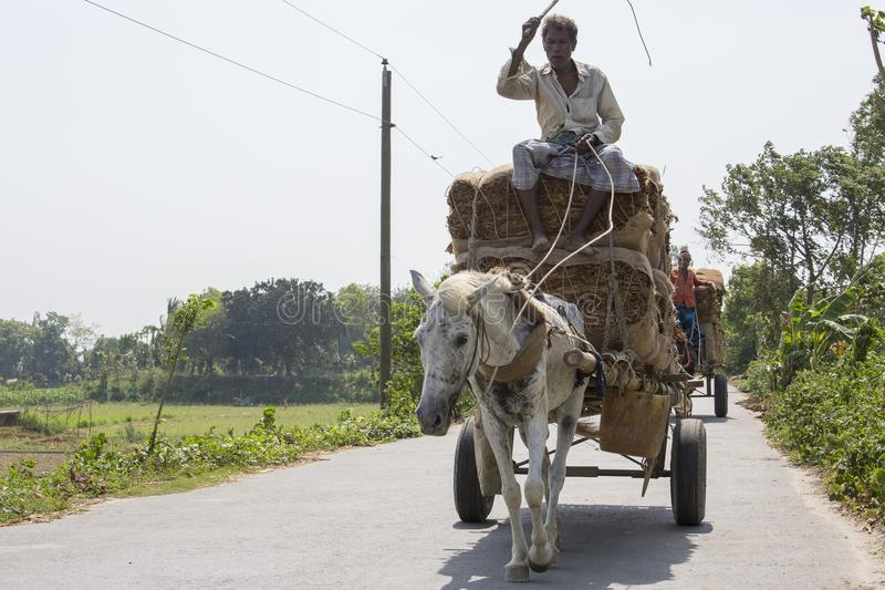 Horse transport is very popular type of transport in our country. It is used in occasion. So, it is our culture. It is used as an. A taana Horse Transport is a stock image