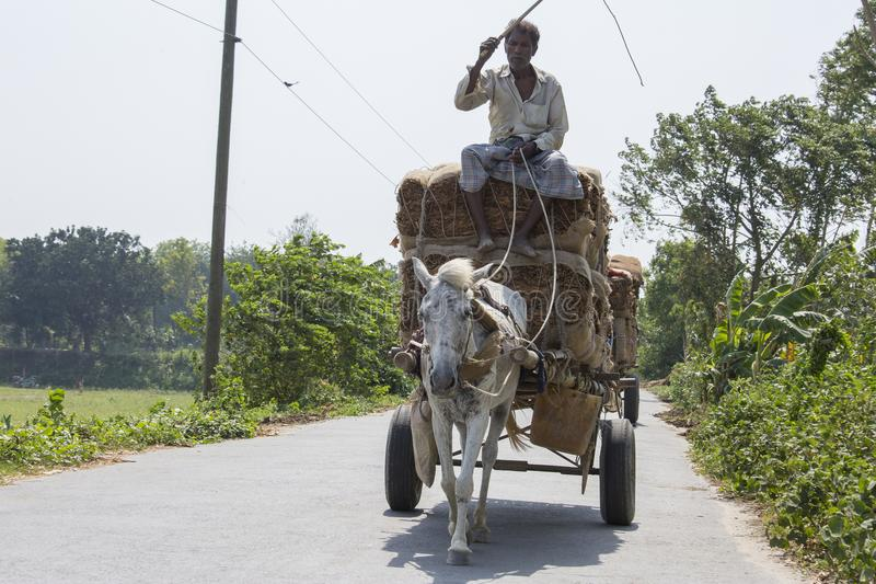Horse transport is very popular type of transport in our country. It is used in occasion. So, it is our culture. It is used as an. A taana Horse Transport is a stock photos