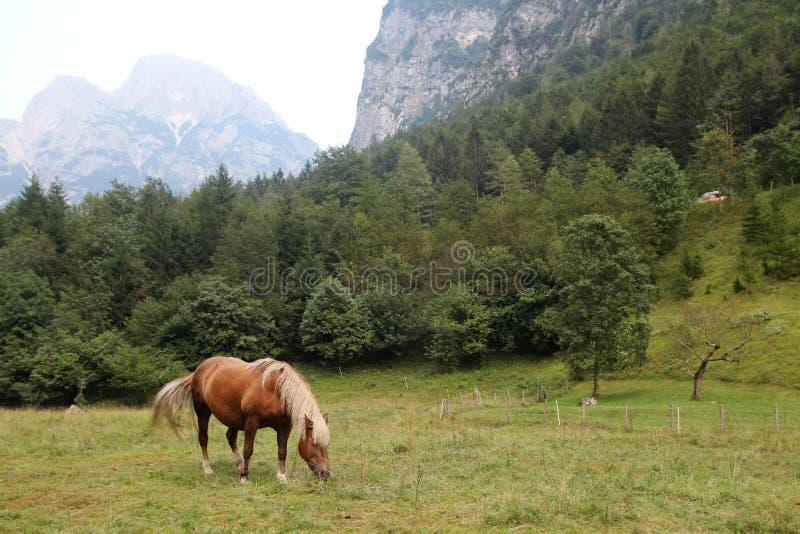 A horse in Trenta village in Soca valley in Slovenia. A horse in Trenta village in Soca river valley in Triglav National Park in Slovenia stock image