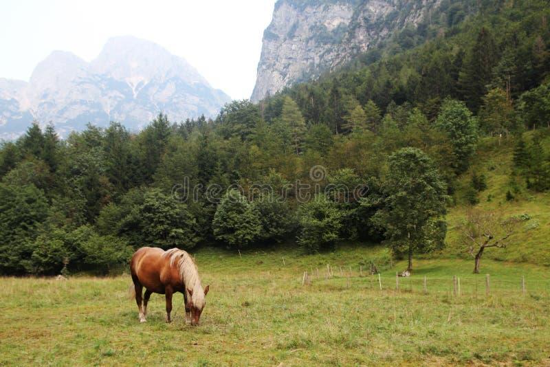 A horse in Trenta village in Soca valley in Slovenia. A horse in Trenta village in Soca river valley in Triglav National Park in Slovenia stock photography