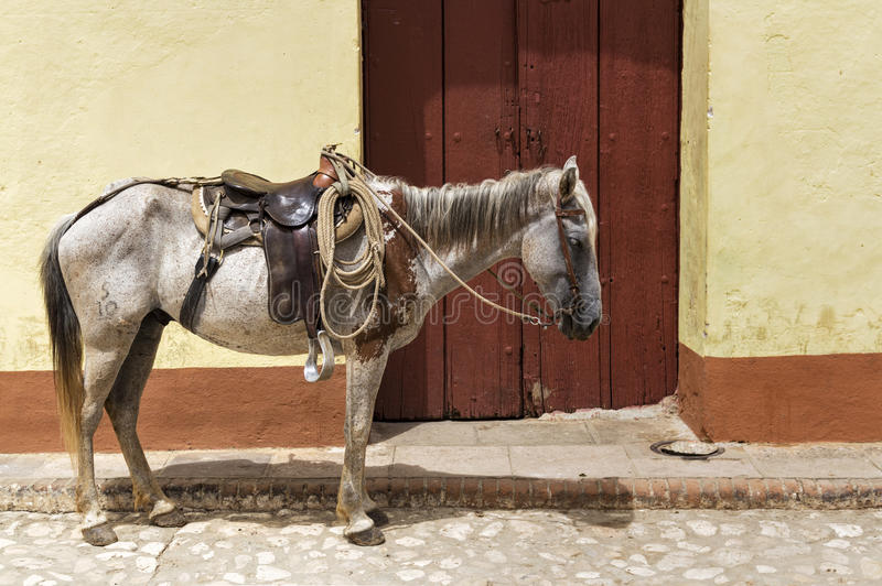 Horse in Trinidad , cuba. Horse in front of a typical colonial house in Trinidad, Cuba royalty free stock photography