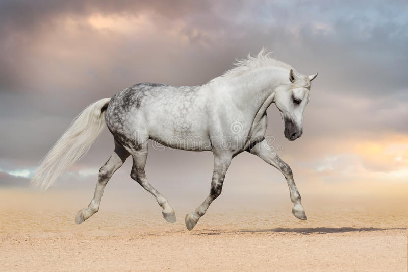 Horse trot stock photo