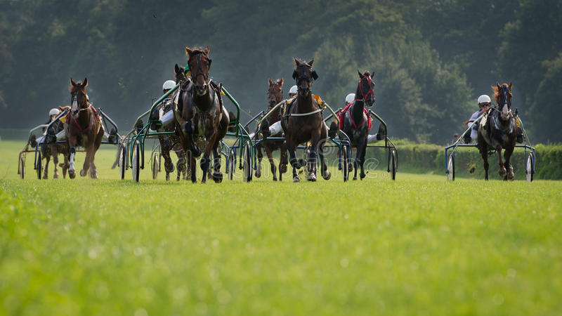 Horse trotting race royalty free stock photos