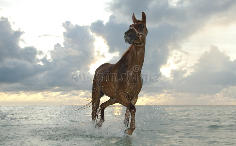 Download Horse trotting at sunrise stock photo. Image of tropical - 20408976