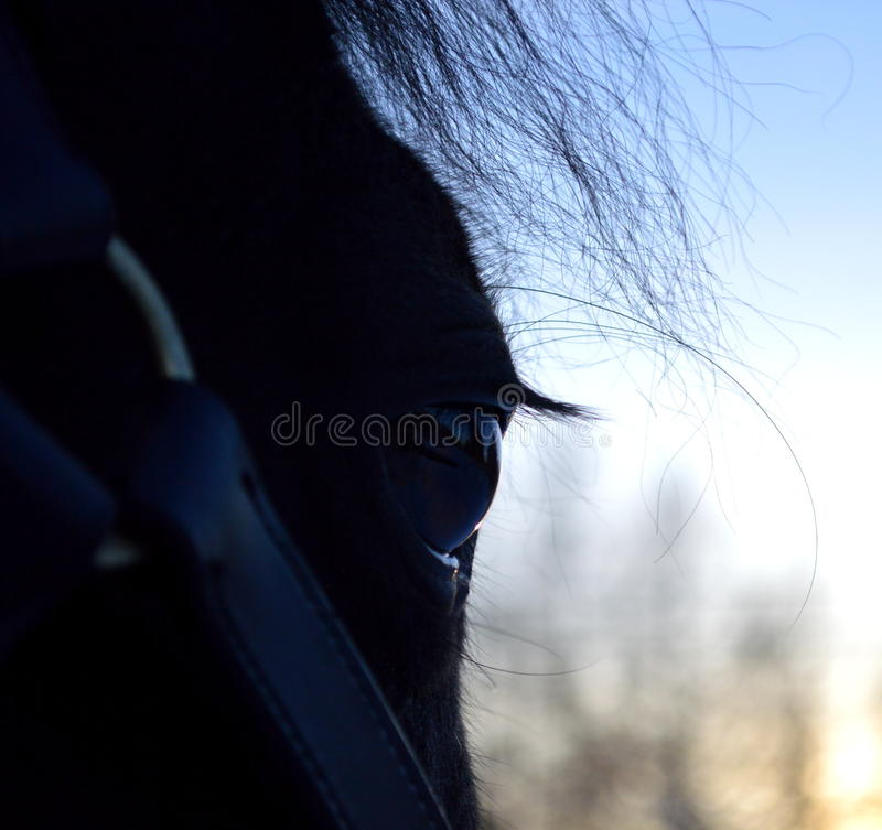 Download Horse stock photo. Image of long, feature, mechanization - 41741492