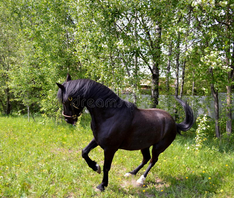 Download Horse stock photo. Image of have, skull, agriculture - 41741660