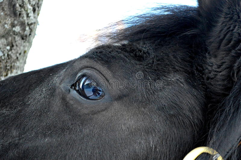 Download Horse Stock Photo - Image: 41812604