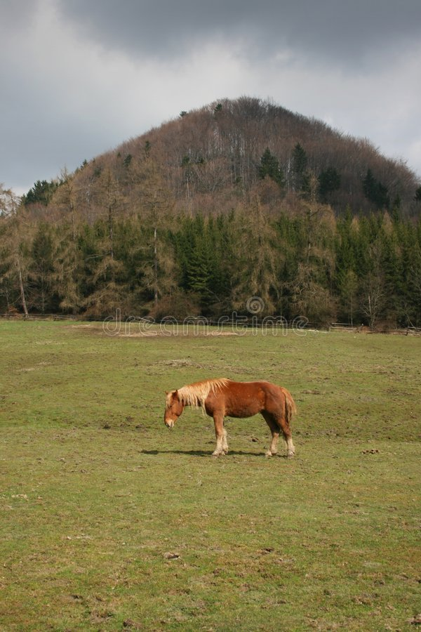 Download Horse under the hill stock photo. Image of mount, subungulate - 5010246