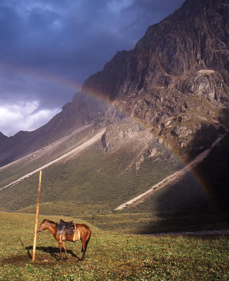 The horse under the rainbow stock photo