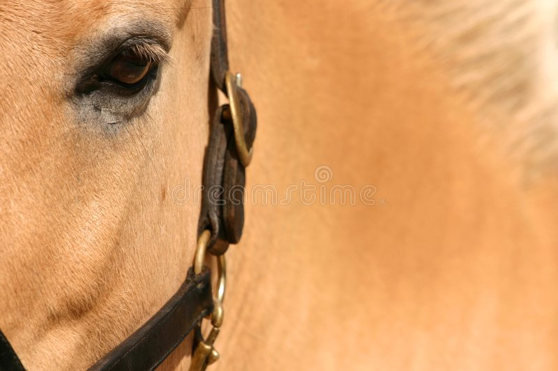 Horse up close stock photo